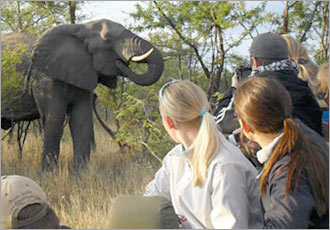 Big 5 game viewing in Kruger Park