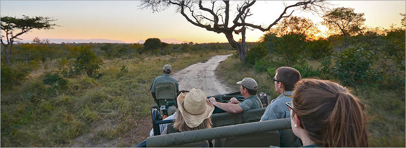 Thornybush Big 5 SAfari