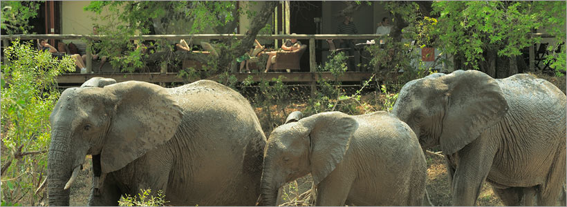 Viewing elephants right in front of your lodge at Tintswalo