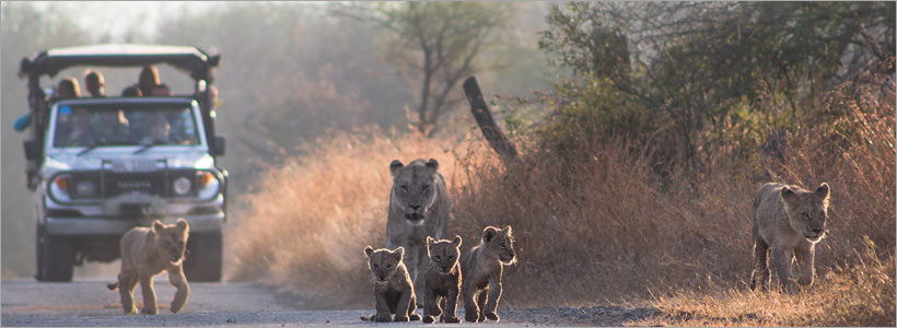 View some truly spectacsights in Kruger Park with Go Safari