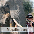 Elephant interaction in Magaliesberg