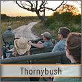 Thornybush 5 Star Game Reserve