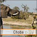 Elephants in Chobe - Botswana