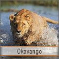 Experience the wild of Okavango