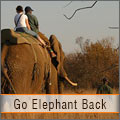 Elephant back safari at the Kruger Park